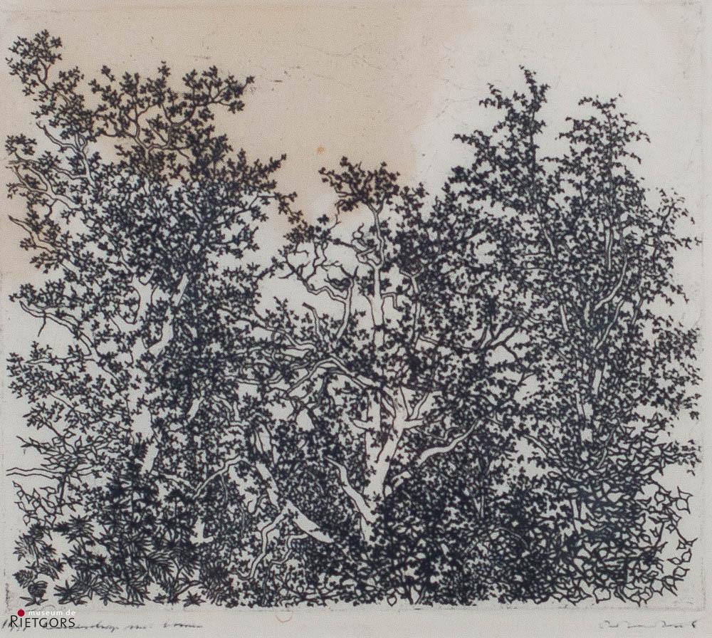 W. Noordhoek (1916-1995) - Bomen, Plasmolen. Ges. R.O. 11/31.