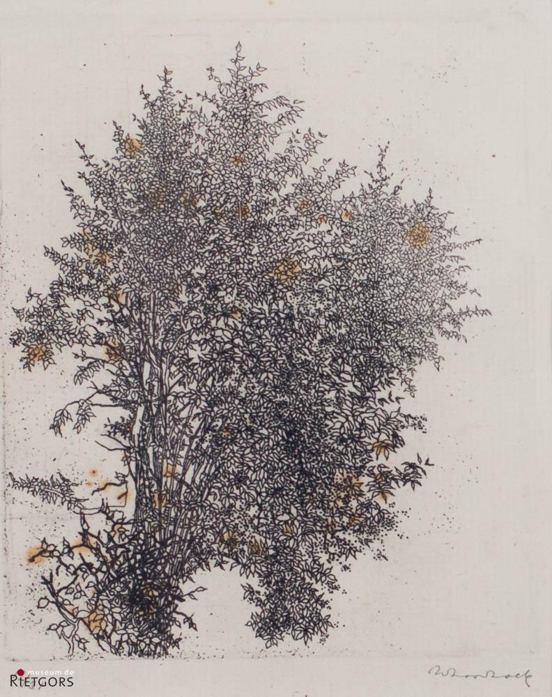 W. Noordhoek (1916-1995) - Bomen. Ges. R.O. 12/31.